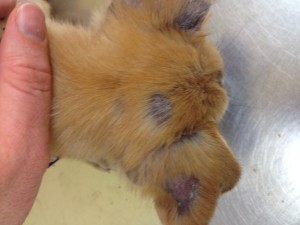 Vet Chat With Dr Llera Scratching The Surface Of Skin