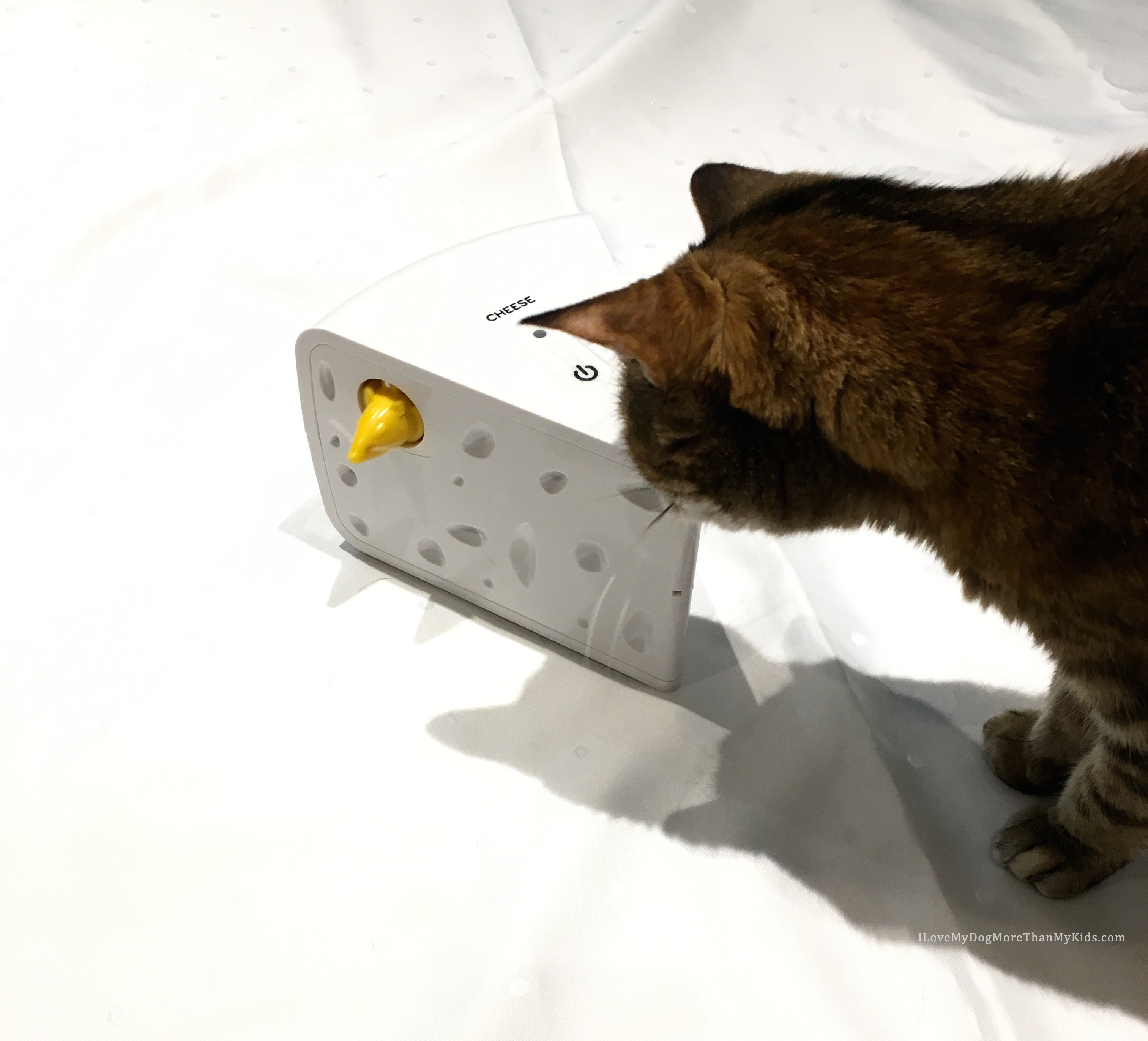 Automated Cat Toys : Frolicat cheese™ automatic cat teaser toy by petsafe