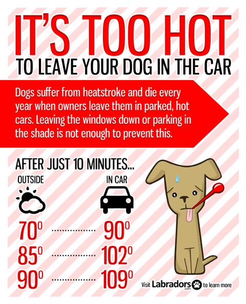 Dogs and Heat – Not a Mix