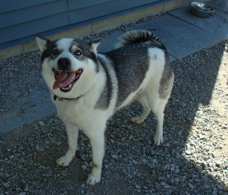 Edie's – Ontario SPCA – Pet of the Week