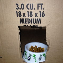 """The Cat """"Food"""" in the Box"""
