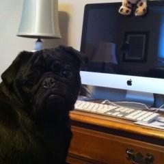 International Pet Blogger Month