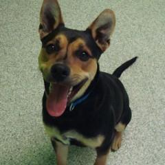 Edie's Ontario SPCA – Pet of the Week