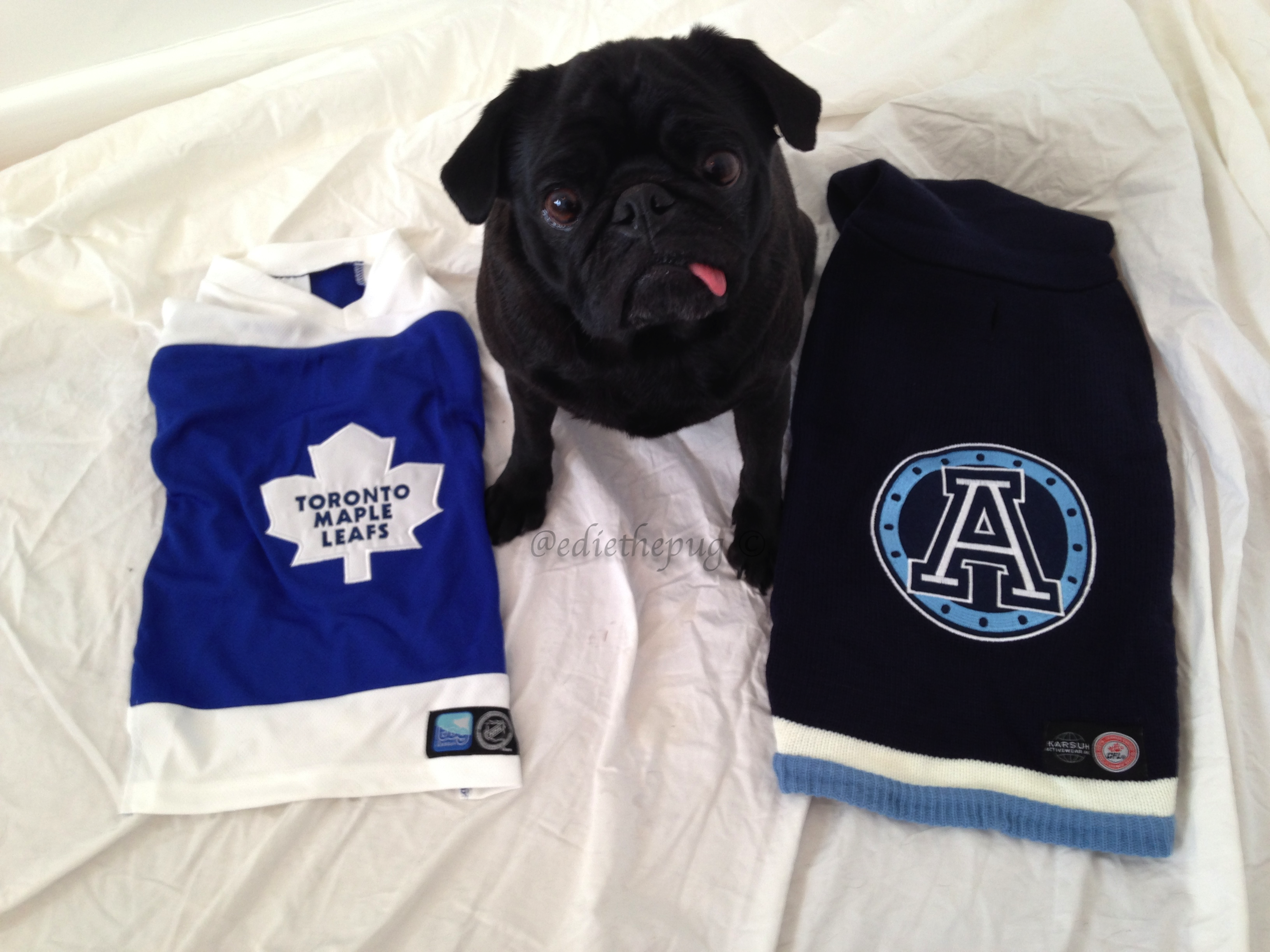 CFL   NHL Tog Pet Wear by Karush ILoveMyDogMoreThanMyKids d5ce69afb