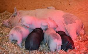 Ophelia and babies