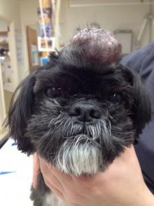 Tumor on head