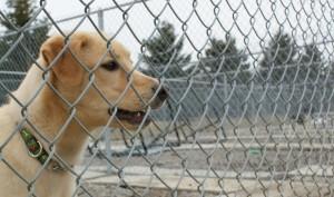 Marely SPCA