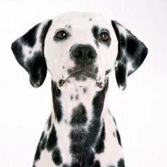Animal Actors or Pets