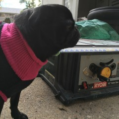 Renovations with Pets – Week 1