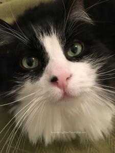 Indoor cats need vet checkups too