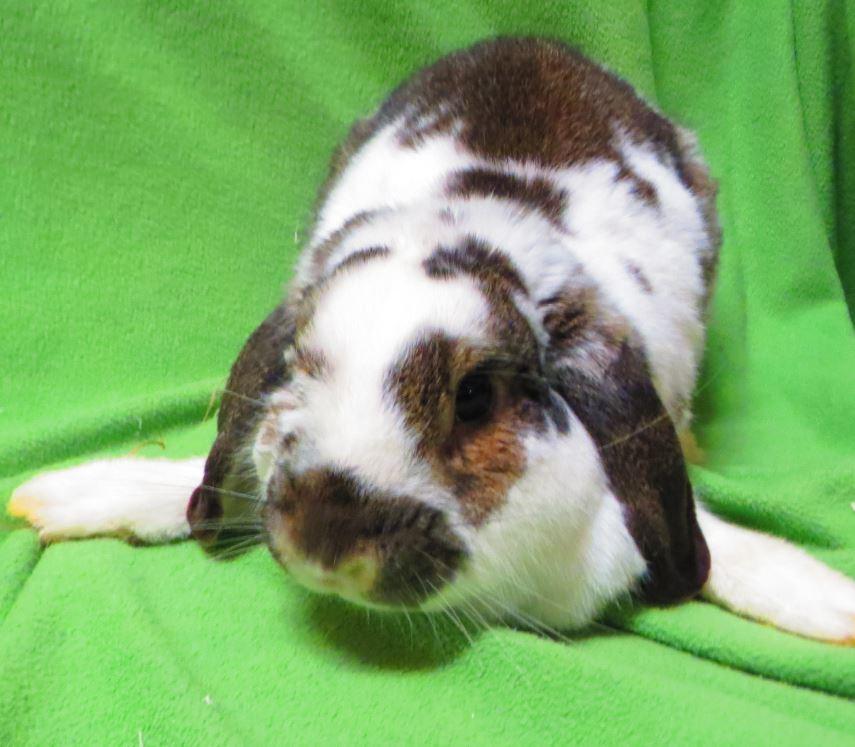 Edie's Adoptable Pet of the Week - Ontario SPCA