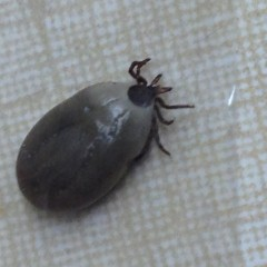 Ticks and Your Pets