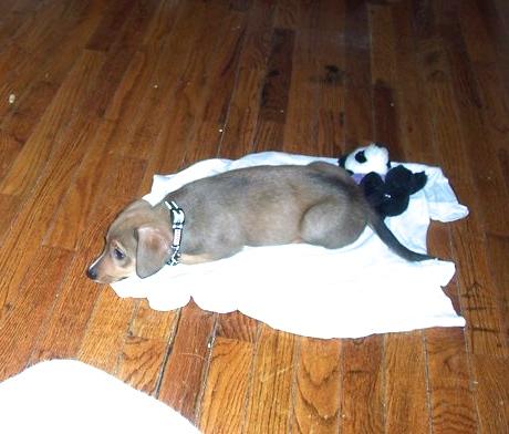 Pet Rescue Stories - Tera