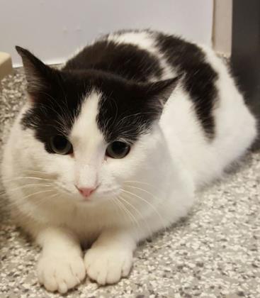 Akali is Edie's Adoptable Pet of the Week for Ontario SPCA