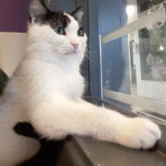 Edie's Adoptable Pet of the Week for Ontario SPCA