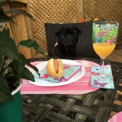 Dog Days of Summer Safety