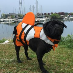 Dog Days of Summer Safety – Water Safety