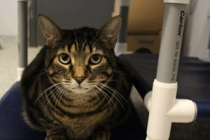 Adoptable Pet of the Week - Francois