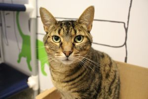 Adoptable Pet of the Week - Stitch