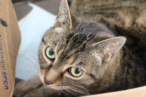 Adoptable Cat of the Week