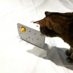 FroliCat® Cheese™ Automatic Cat Teaser Toy by PetSafe – Review