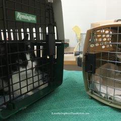 Cats – They Can Love Going to the Veterinarian!