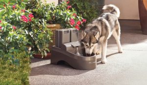 Hydrate for Health - Importance of Pet Hydration #ad