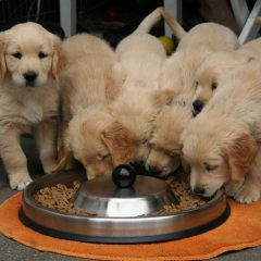How Much Are Our Dogs Really Eating?
