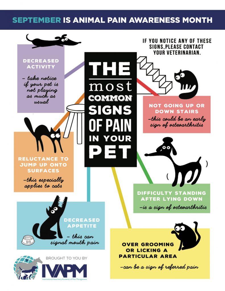 Animal Pain Awarenes