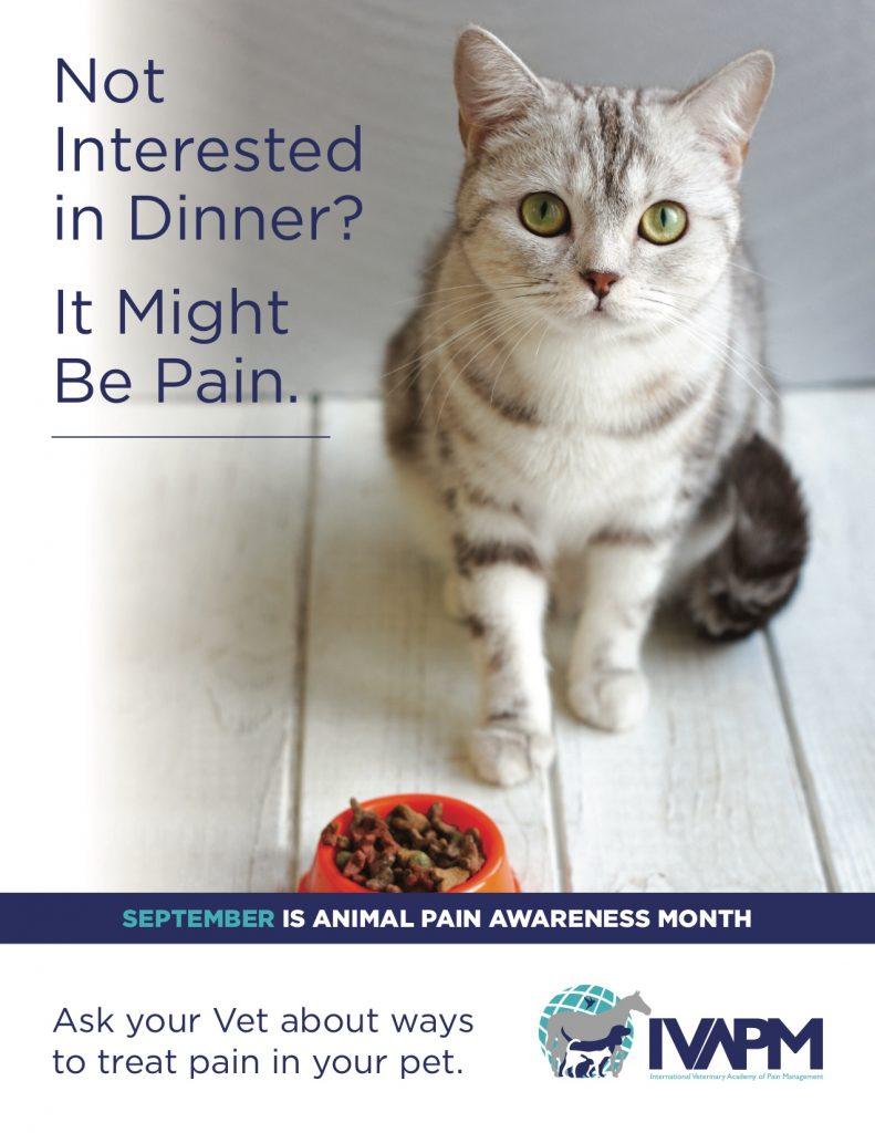 Animal Pain Awareness