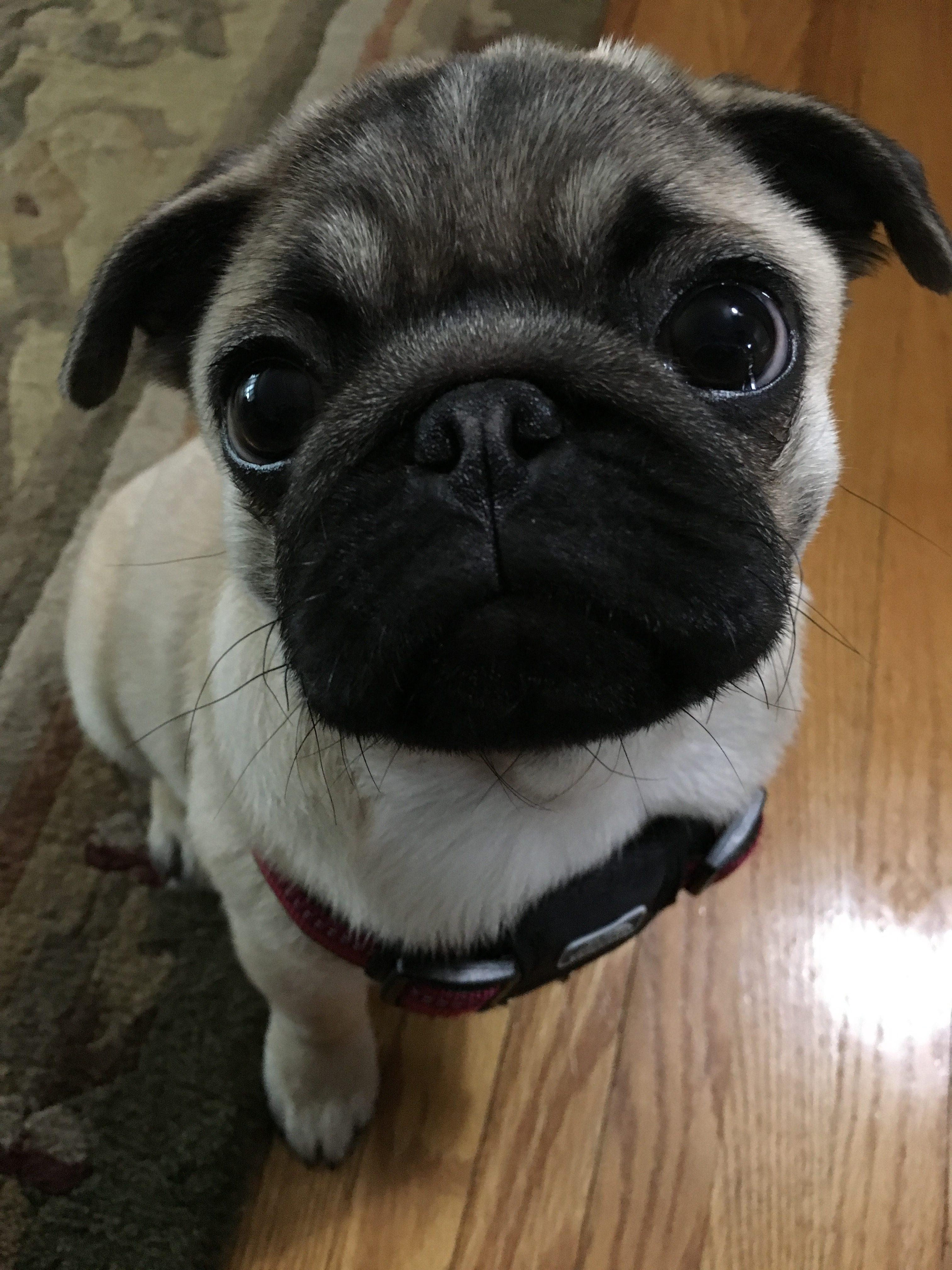 Puppy House Training Im Not The Potty Whisperer