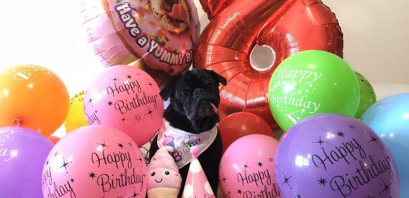 Happy 8th Birthday Edie the Pug