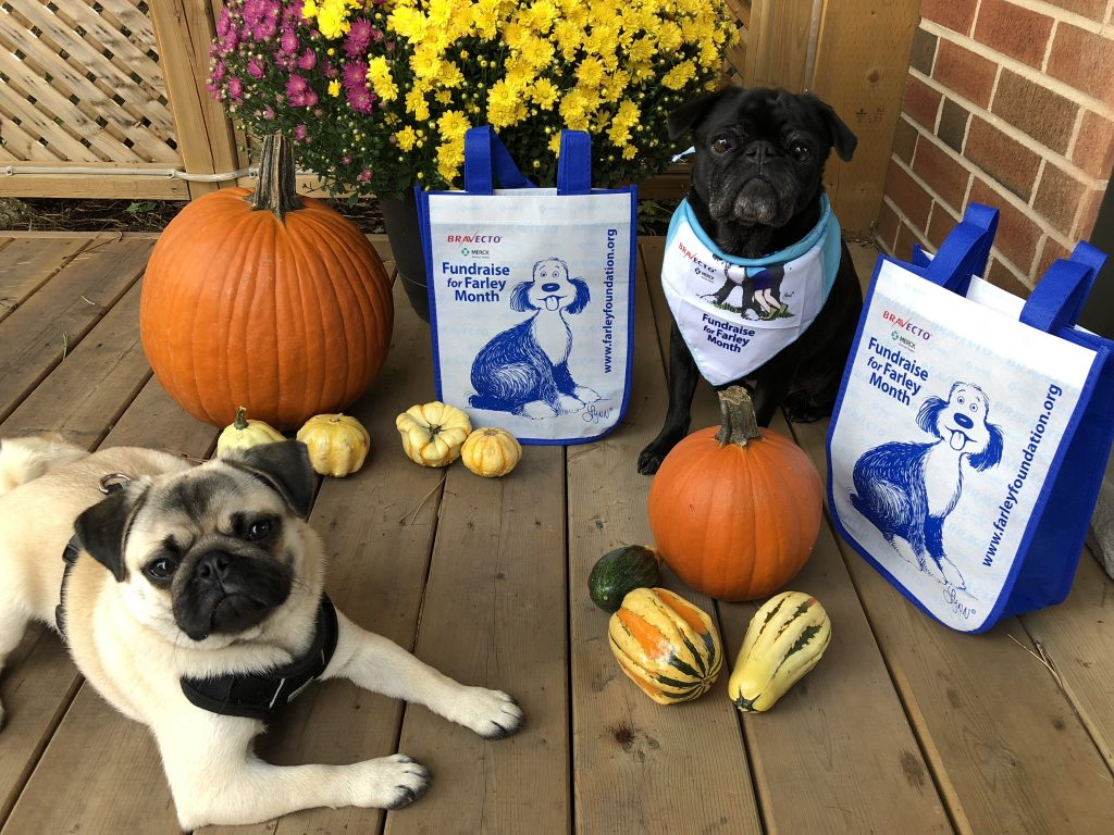 Starting October 1, 2018, the Farley Foundation kicks off its annual fundraising campaign to helpthose who are struggling financially to pay for veterinary care for their pets.