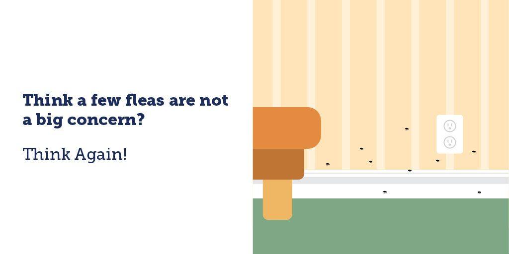 It's Flea and Tick Season! #ad #ThinkAgainFleas #ThinkAgainTicks