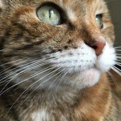 Happy 17th Birthday Lily Cat!