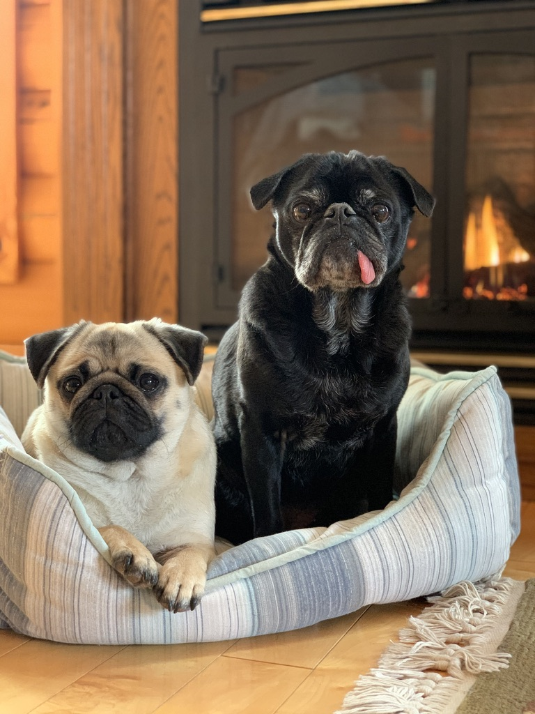 Moving Long Distance with Pugs and A Cat