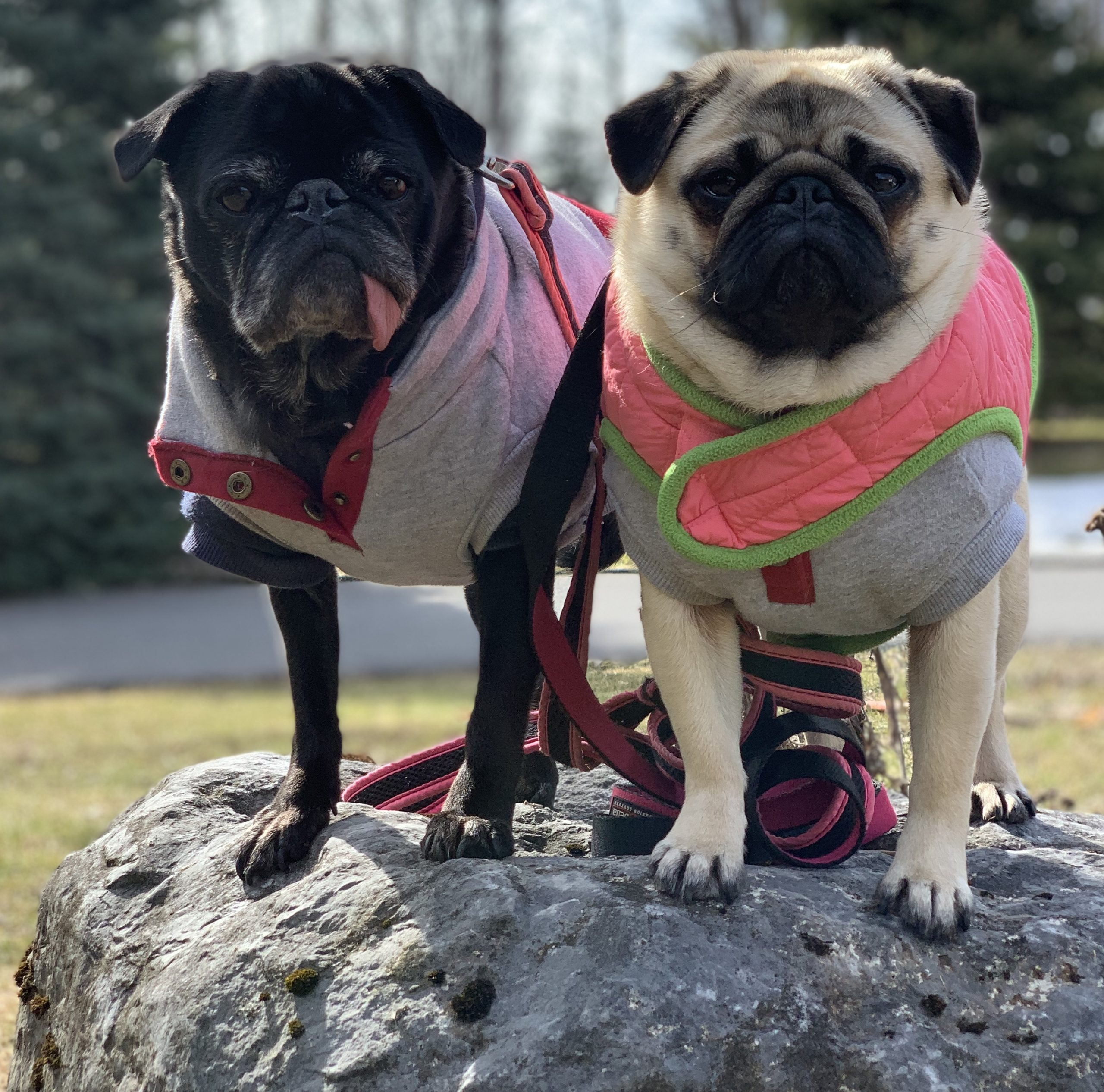 Edie and Edna's Social Distancing Diary Update for April 6, 2020