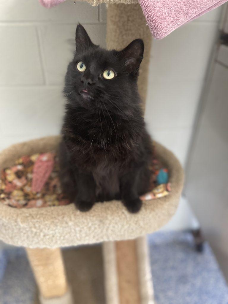 Adoptable Cat of The Week - Luna