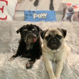 Paw Original PupProtector™ Waterproof Throw Blanket– Review and Giveaway!