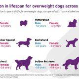 Pet Obesity Awareness Month